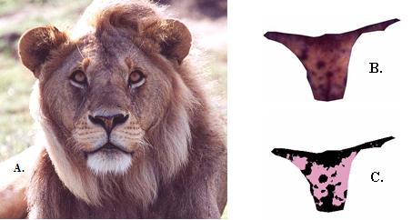 Lion Nose Pigmentation