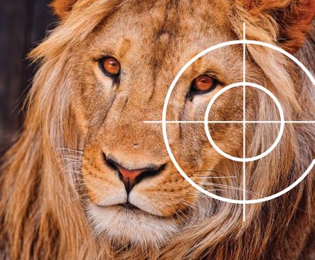 Lion_CACH