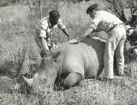 Rhino - Operation Rhino