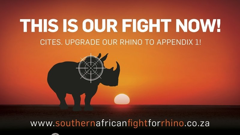 Rhino Fight