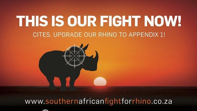 Rhino Fight