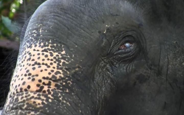 Elephant_Blinded