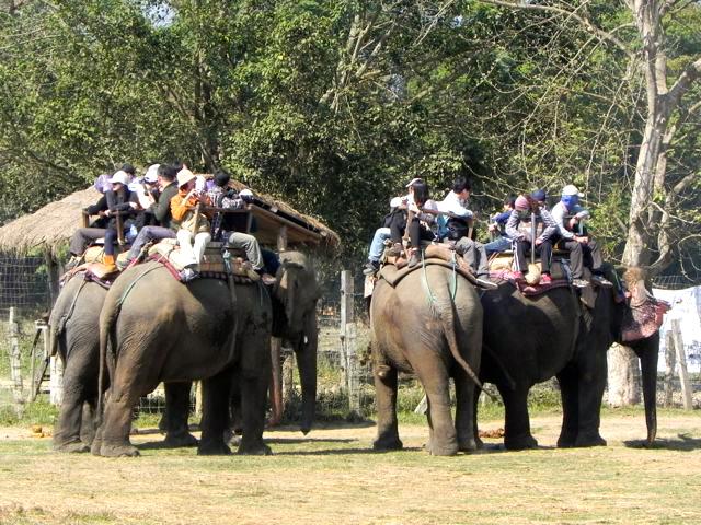 Elephant_Tourist rides