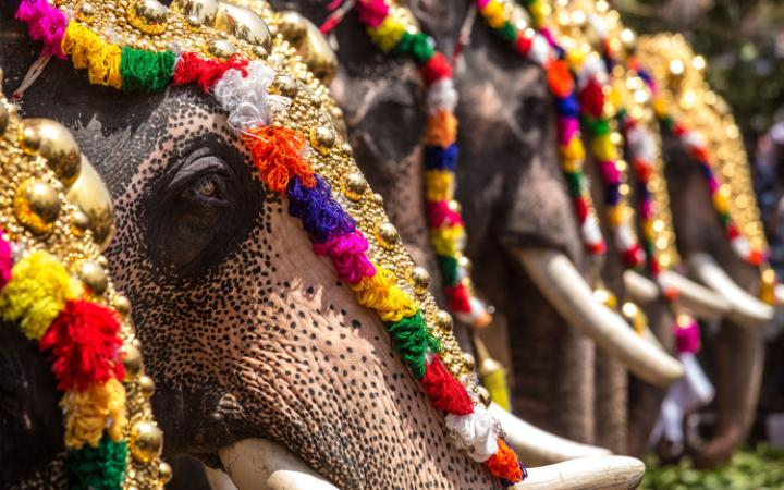 Elephants_Kerala Temple Festivals