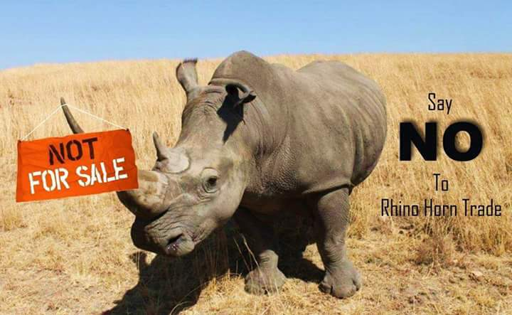 Say-No-to-Rhino-Horn-Trade