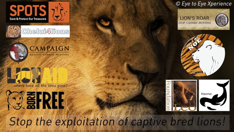 Captive Lion Petition