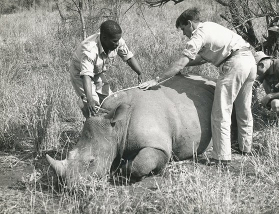 Rhino-Operation-Rhino