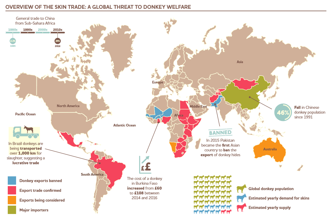 Overview of Donkey Skin Trade